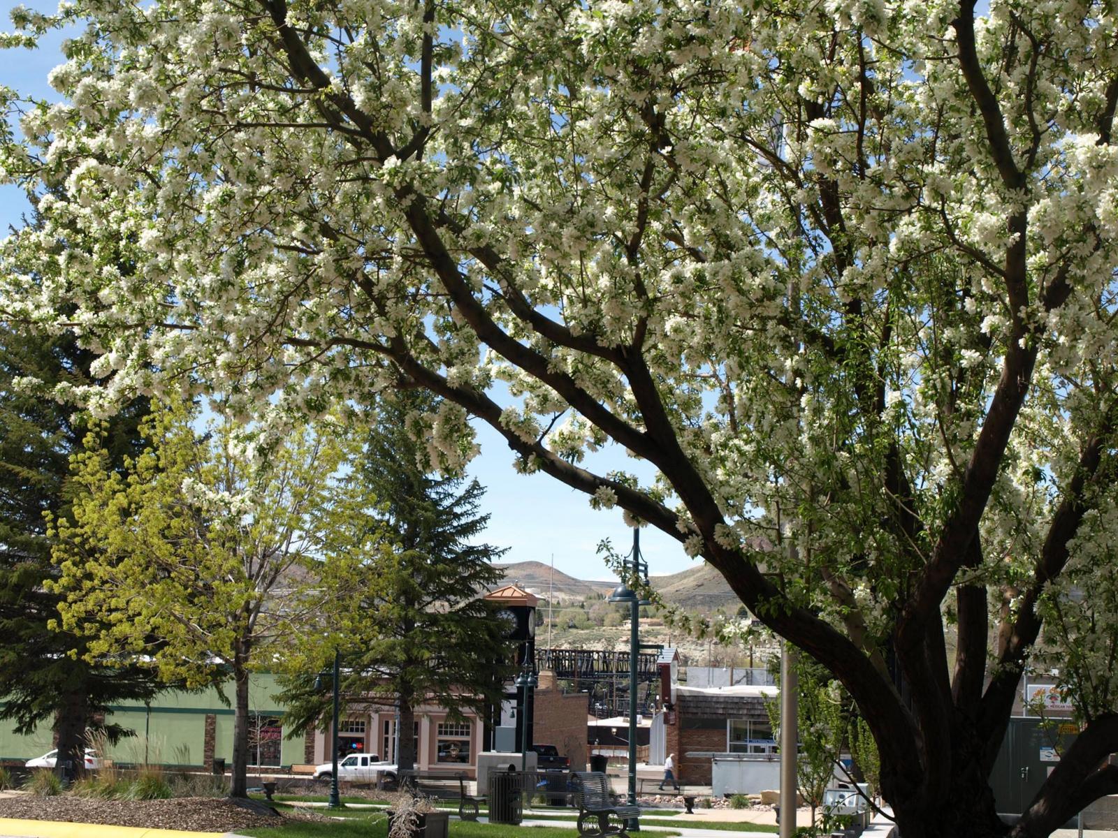 Green River Clock Tower Plaza Photo