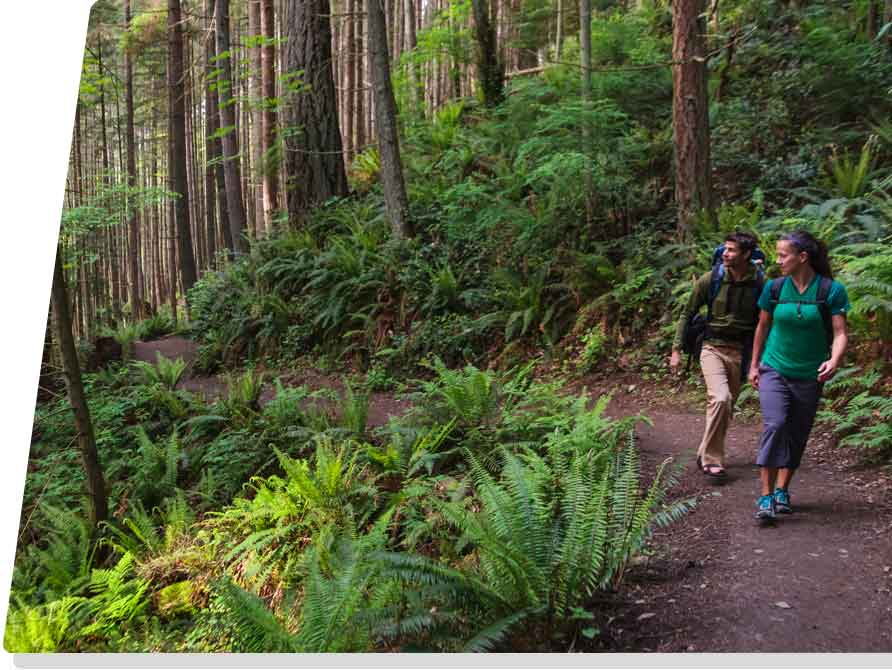hikers on a forest trail