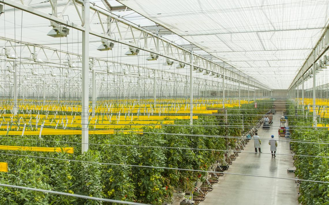Greenhouse project captures steam, carbon dioxide Main Photo