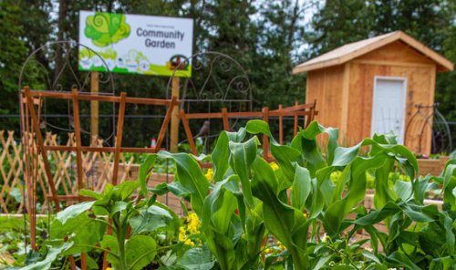 Community Garden Phase 3 - Rent a Garden Box! Main Photo